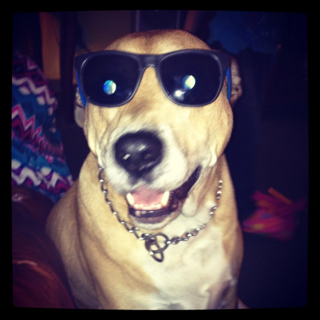 instead of cool cat.. cool doggy