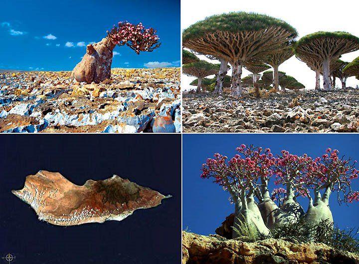 ソコトラ島 - イエメン (Socotra - Yemen) mysterious!