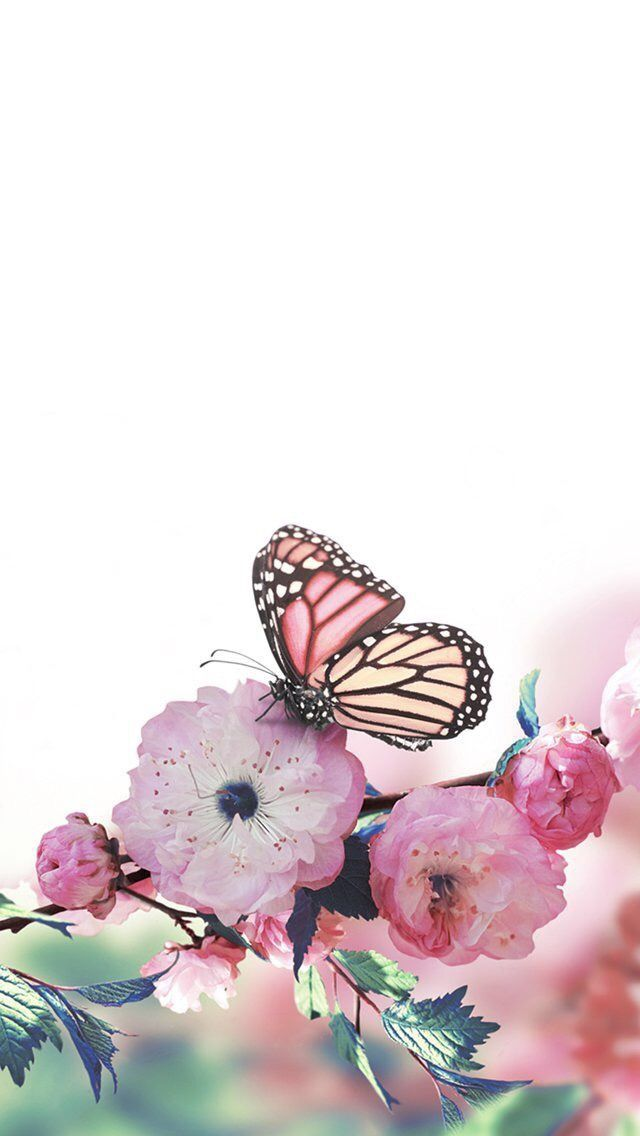 Iphone Wallpaper Butterfly Wallpaper Iphone Butterfly Wallpaper Art Wallpaper