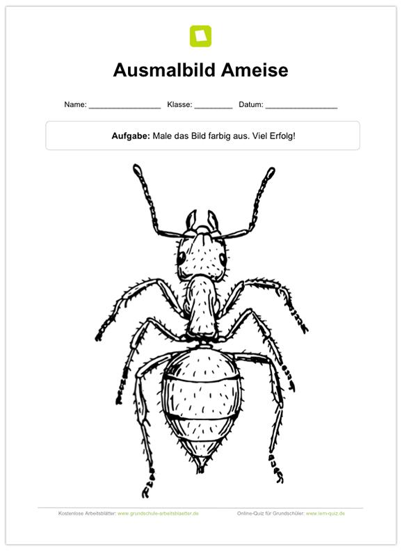 Ein kostenloses Arbeitsblatt zum Thema Ameisen, auf dem die Schüler ...