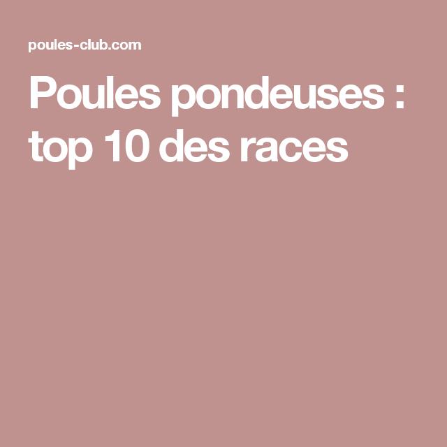 Agréable Top 10 Des Poules Pondeuses #3: Poules Pondeuses : Top 10 Des Races