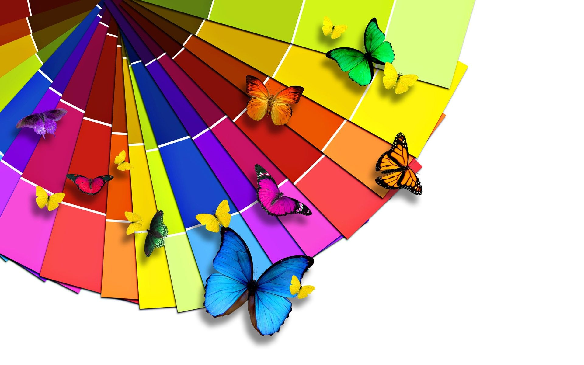 Colorful Butterflies - Colorful Butterflies Wallpaper Rainbow Coloursbright