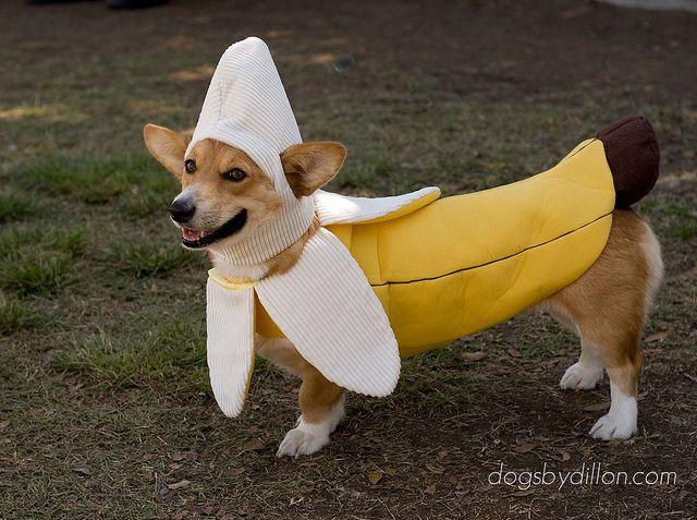 As a banana.