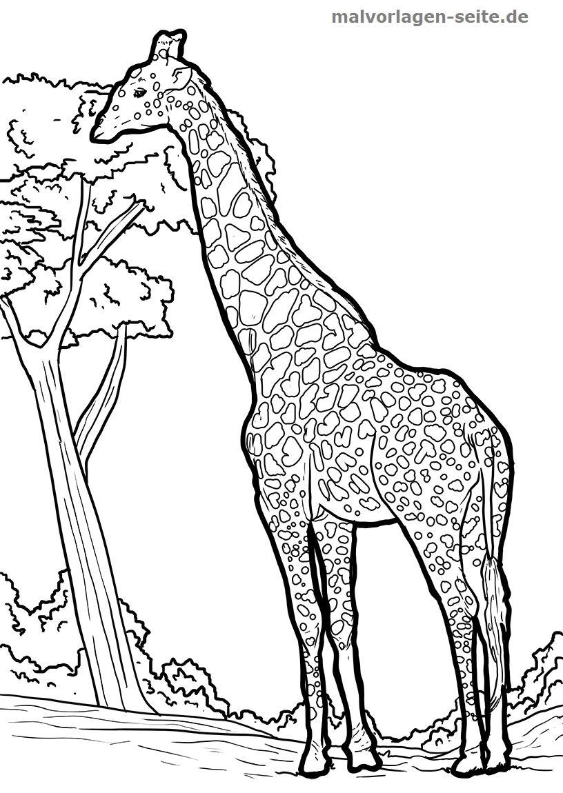 10 Gut Malvorlage Giraffe Idee 2020