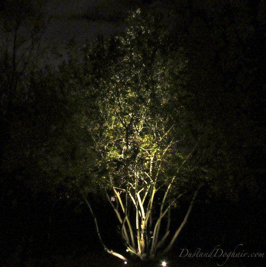 DIY Uplighting — Year-round, Low-cost Magic in Your Yard#diy #lowcost #magic #uplighting #yard #yearround