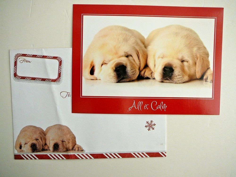 National Wildlife Federation Christmas Card Puppies Sharpei Photo ...