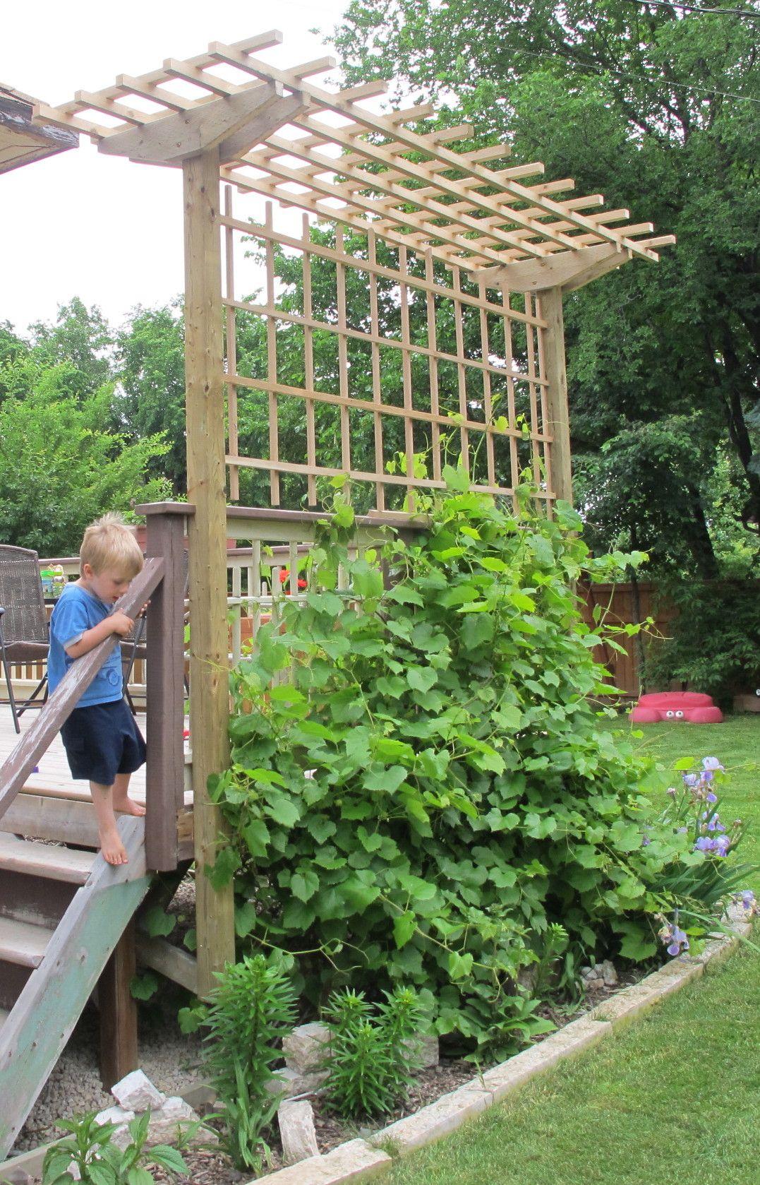 Grape Arbor Construction Deckman Custom Decks Grape Arbor