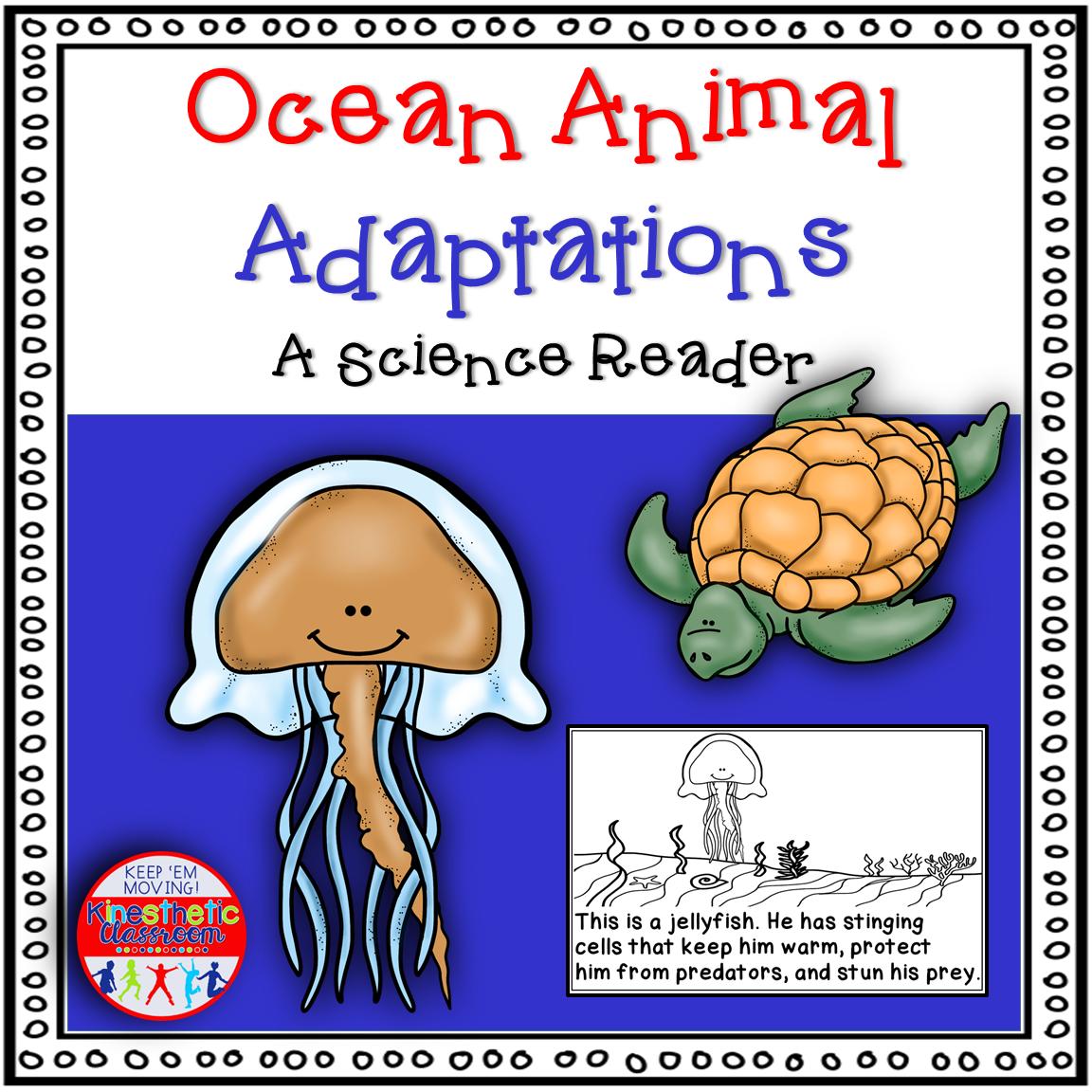 Ocean Animal Adaptations Book Animal adaptations, Animal