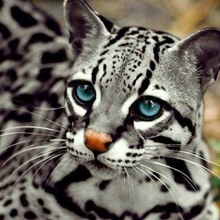 Indonesian Wild Cat With Images Animals Wild Cute Animals