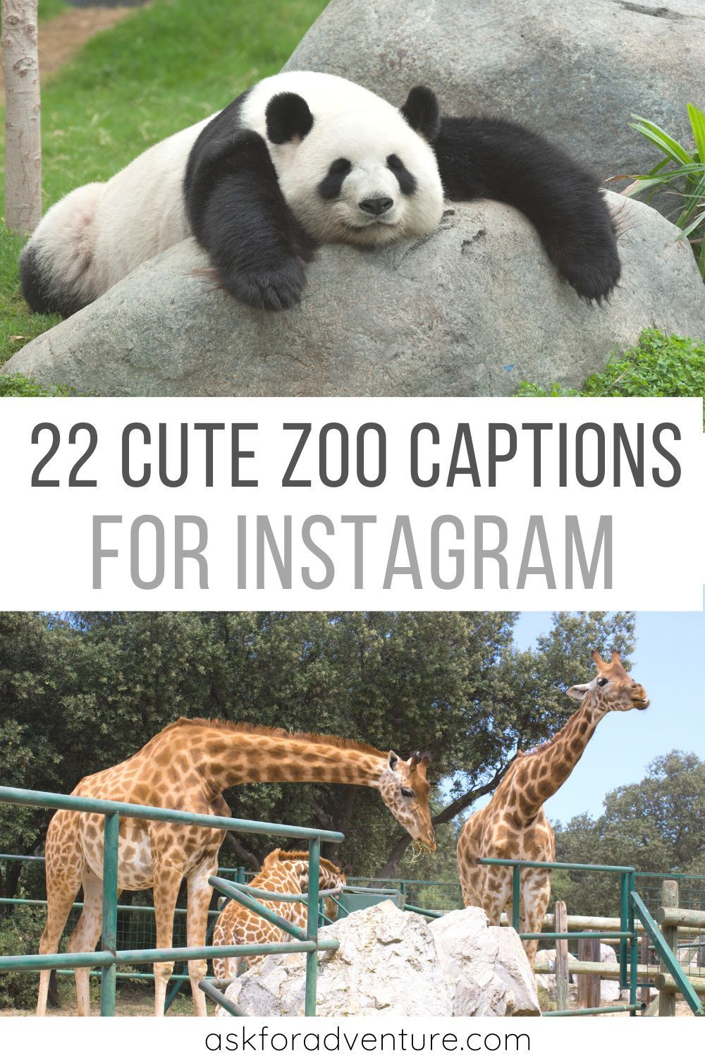 22 Cute Zoo Captions For Instagram Pictures Of Animals Ask For Adventure Instagram Captions Good Instagram Captions Instagram Captions For Pictures