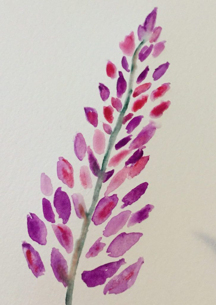 Watercolors For Beginners Lupine Flowers Watercolor Paintings