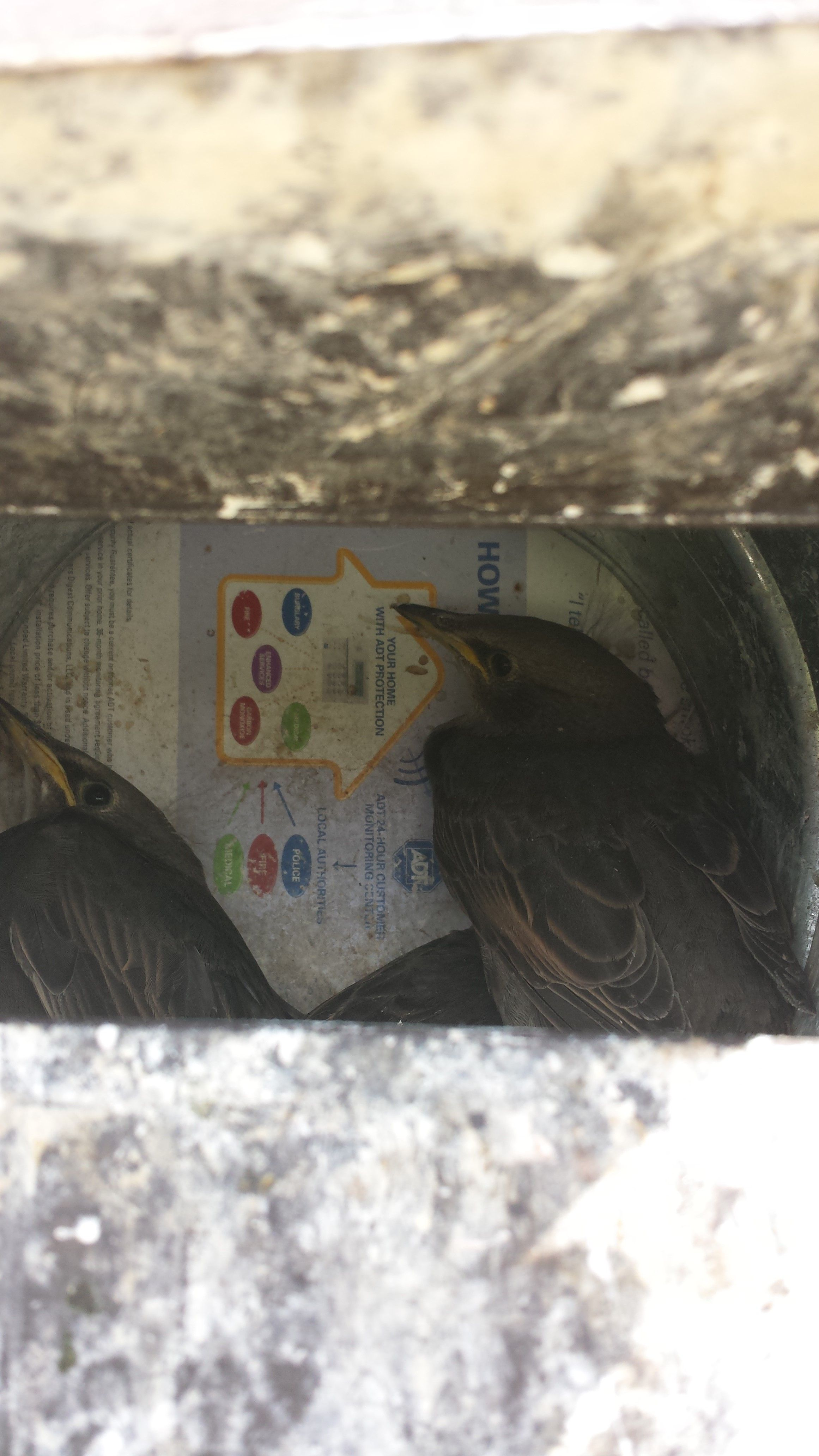 Be Aware That Birds Do Not Just Nest In Dryer Vents They Can Found