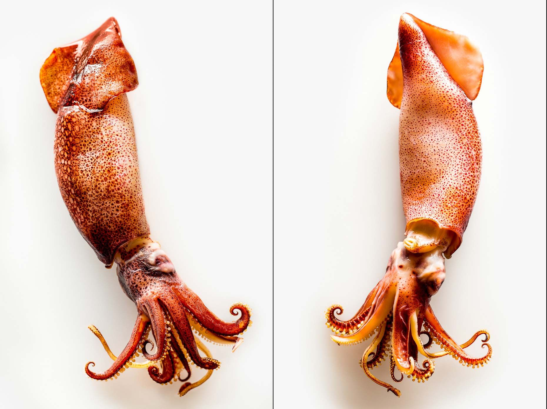Francesco Tonelli is a food photographer in New York. His clients include Cooking Light, The New York Times, Kraft Foods and The Culinary Institute of America.