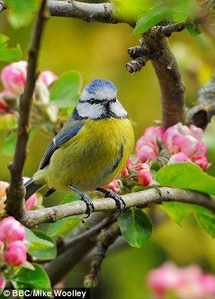 Living near bird life improves mental health according to study #dailymail