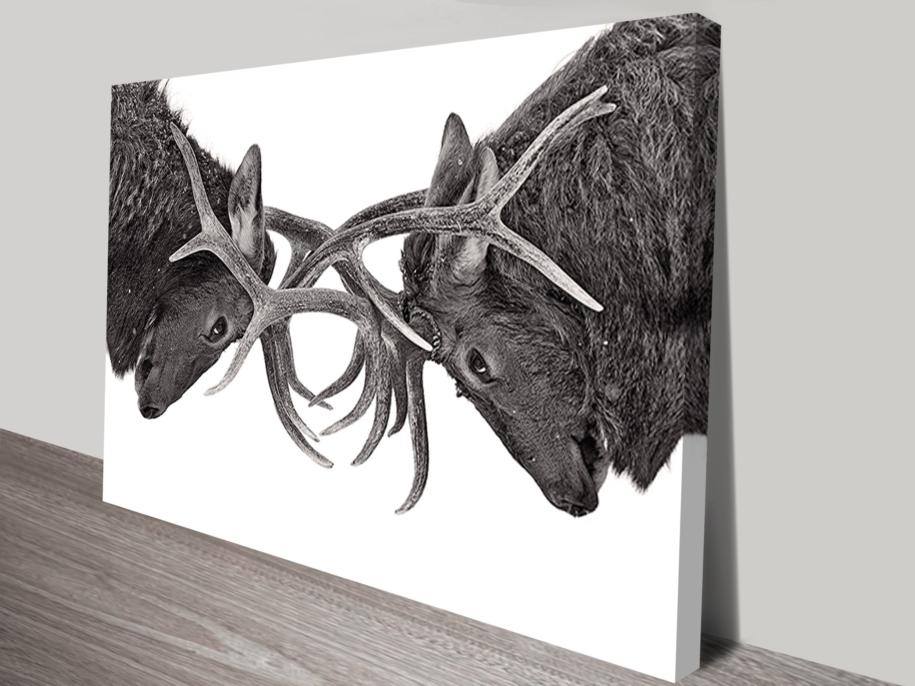 Winter Stags Black And White Photo Print To Canvas Art