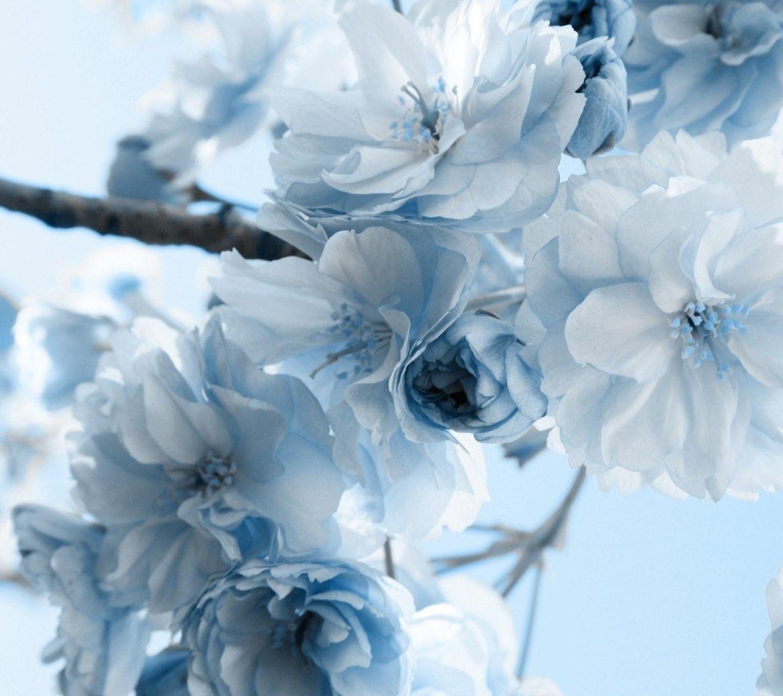 Blue flower tree flowering trees pinterest flower tree blue flower tree izmirmasajfo