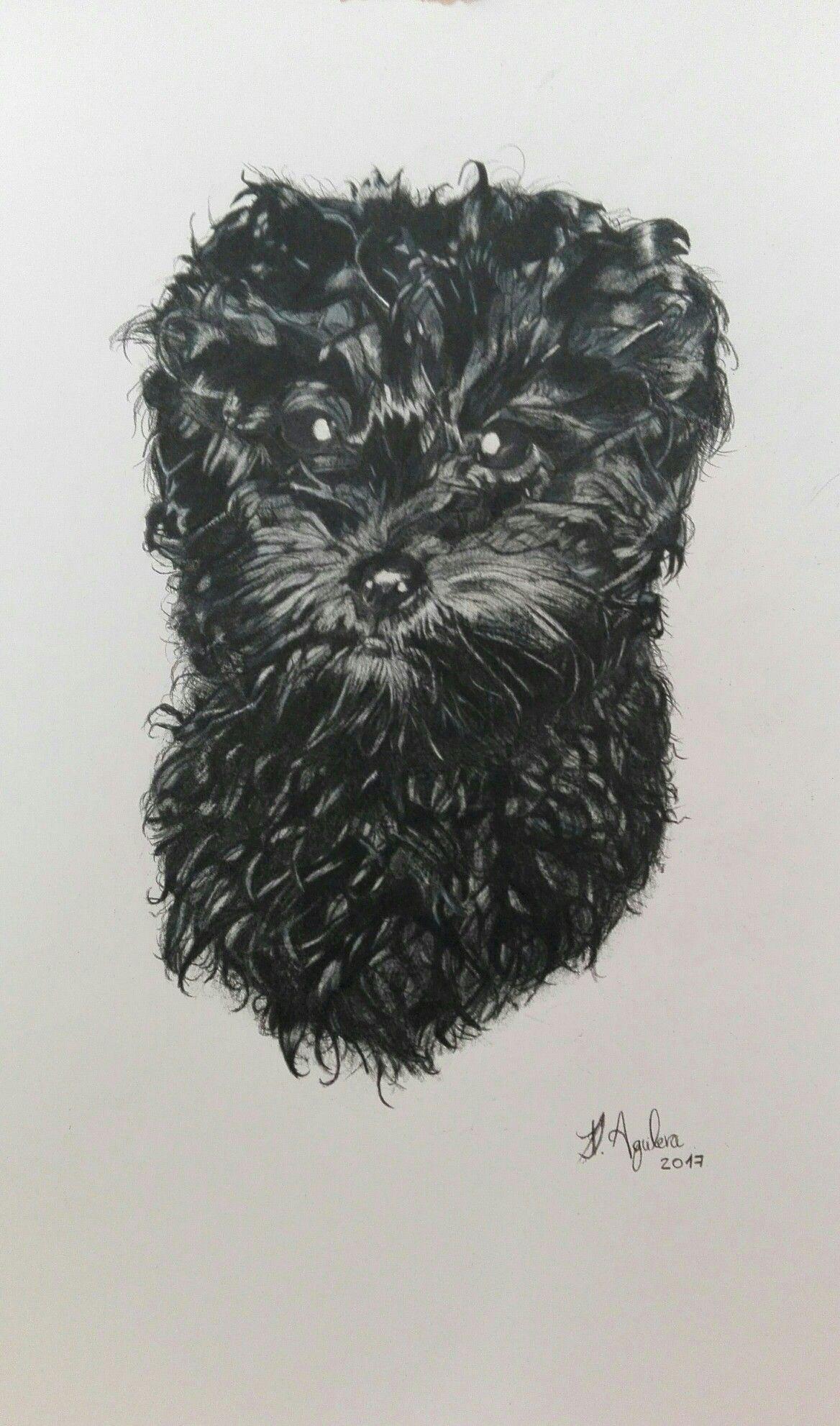 Dibujo Caniche Lapices Colores Pintura Perro Dibujos De Perros Dibujo Madre E Hija
