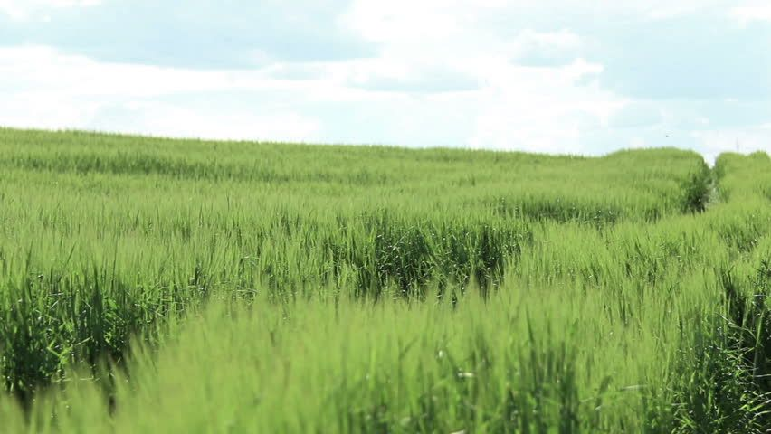 tall grass field long grass image result for tall grass field places from my childhood that