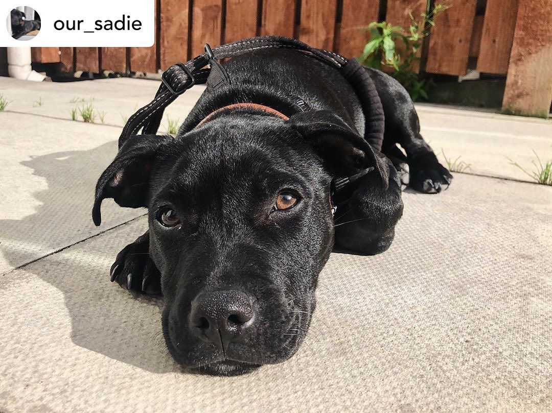 Like To Vote For Sadie Our Sadie Back Home And Settled