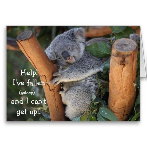 Funny Koala Bear Belated Birthday Card Zazzle Com Koala Bear Cute Koala Bear Funny Koala