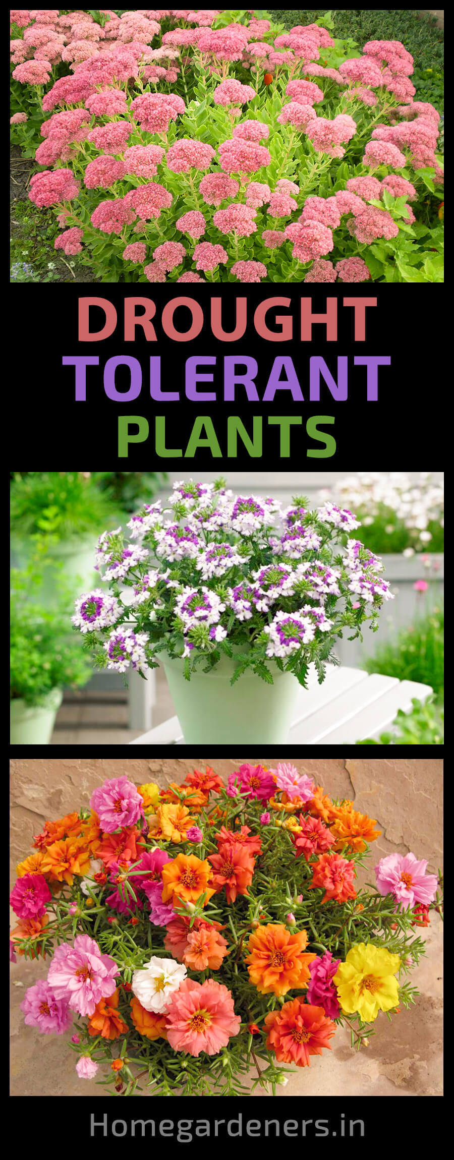 The 10 Best Drought Tolerant Plants that Grow in Lack of Water -   12 plants Home drought tolerant ideas