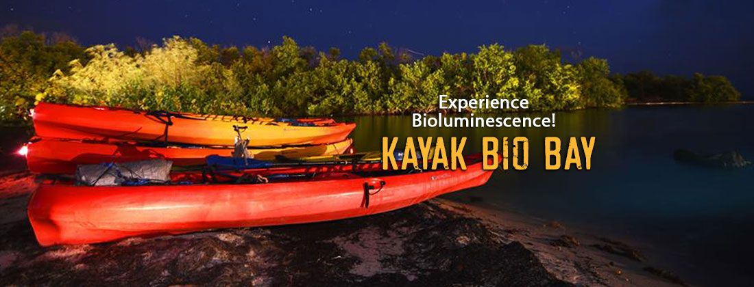 Discover bioluminescence bio bay kayak tour in fajardo