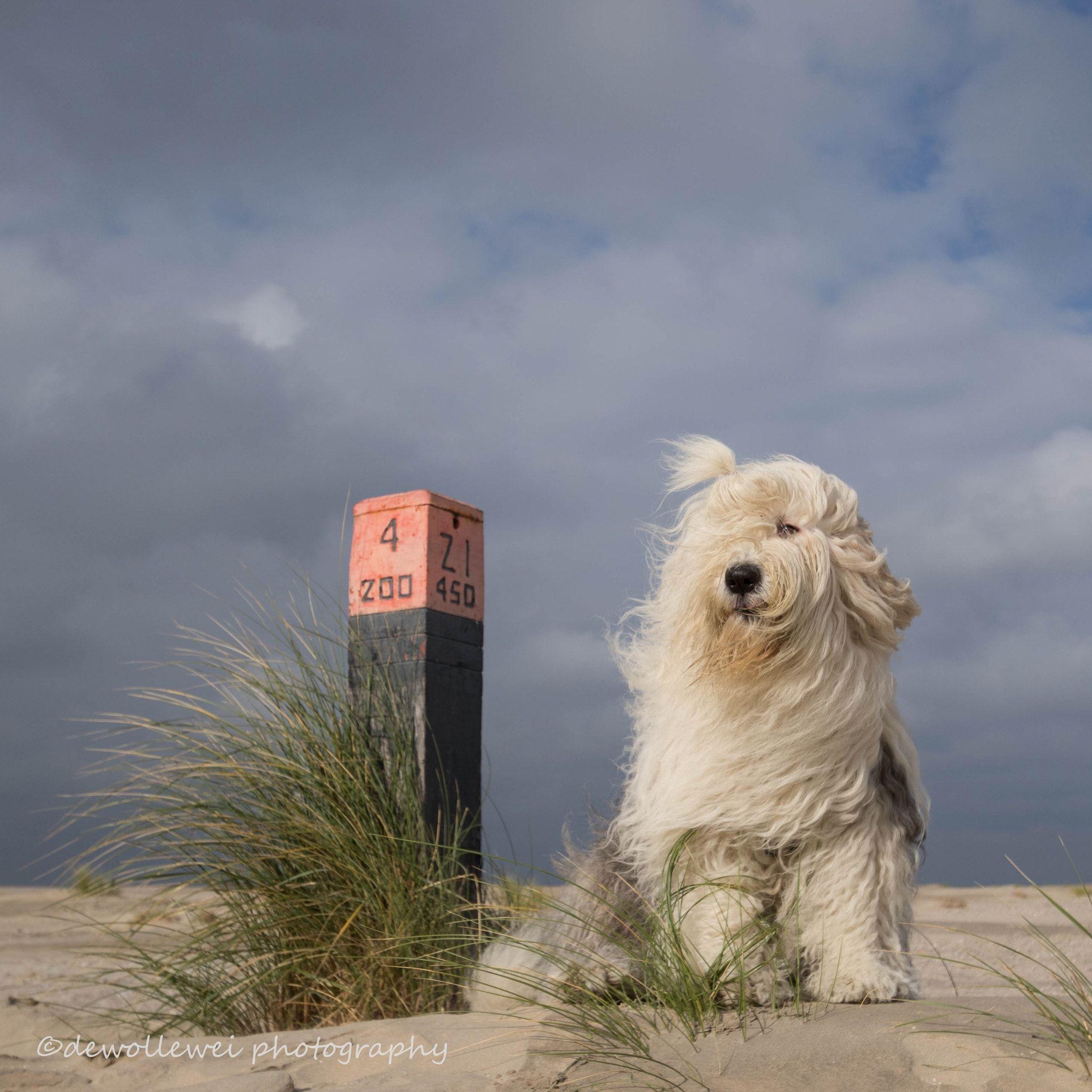 sea breeze - null