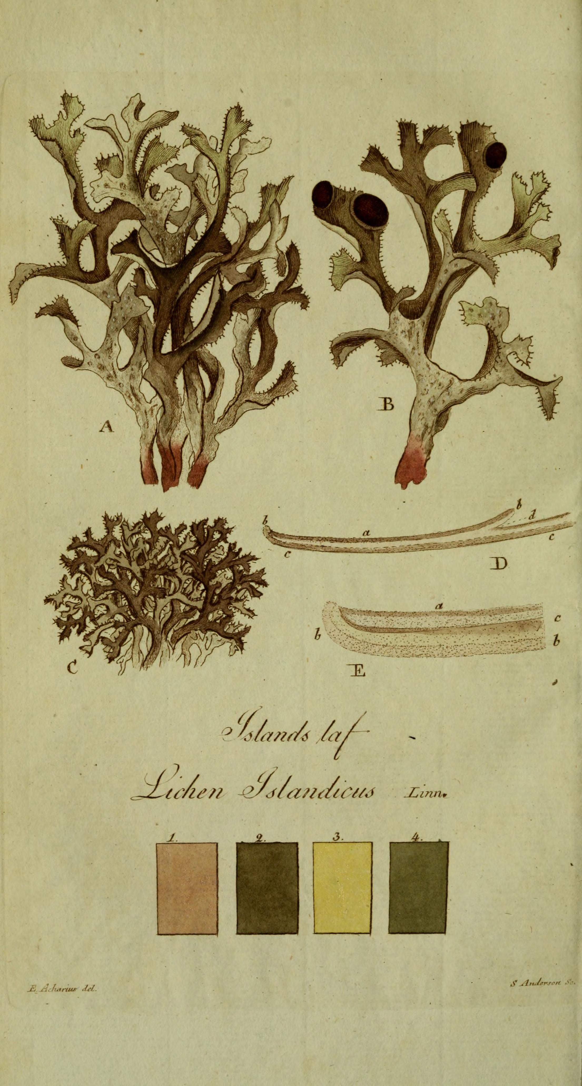 lichen | prints in 2018 | pinterest | art, vintage art and vintage