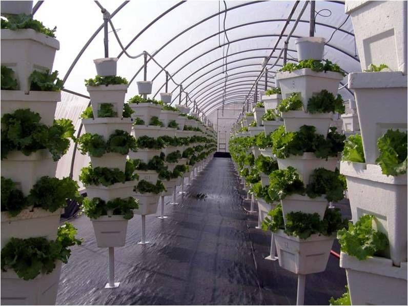 Vertical Greenhouse Aquaponics Tower Garden Vertical Garden