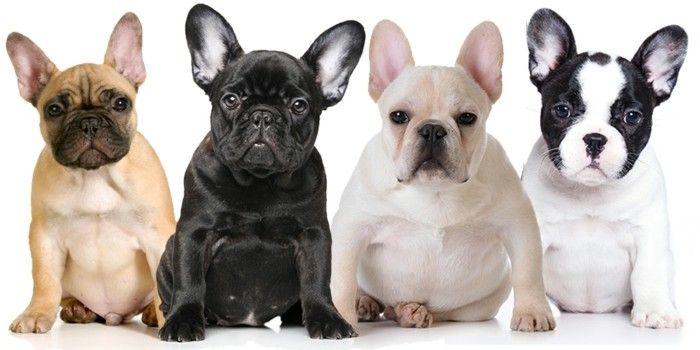 Beliebte Hunderassen Top 10 Der Vierbeine 2017 Beliebte Hunderassen Hunde Rassen Hunderassen