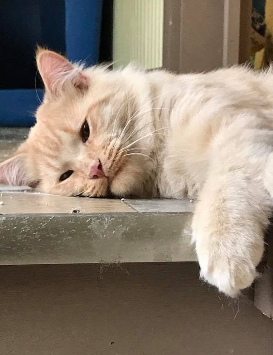Pin On Cat Health Things Every Cat Owner Should Know