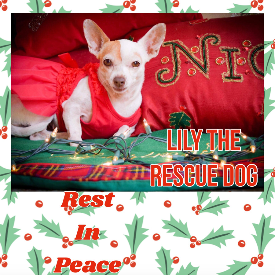 Lucy to the Rescue! LUCY THE RESCUE DOG INC. Rescue