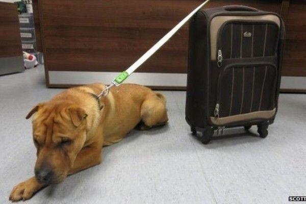 Abandonan a perrito con maleta y todo