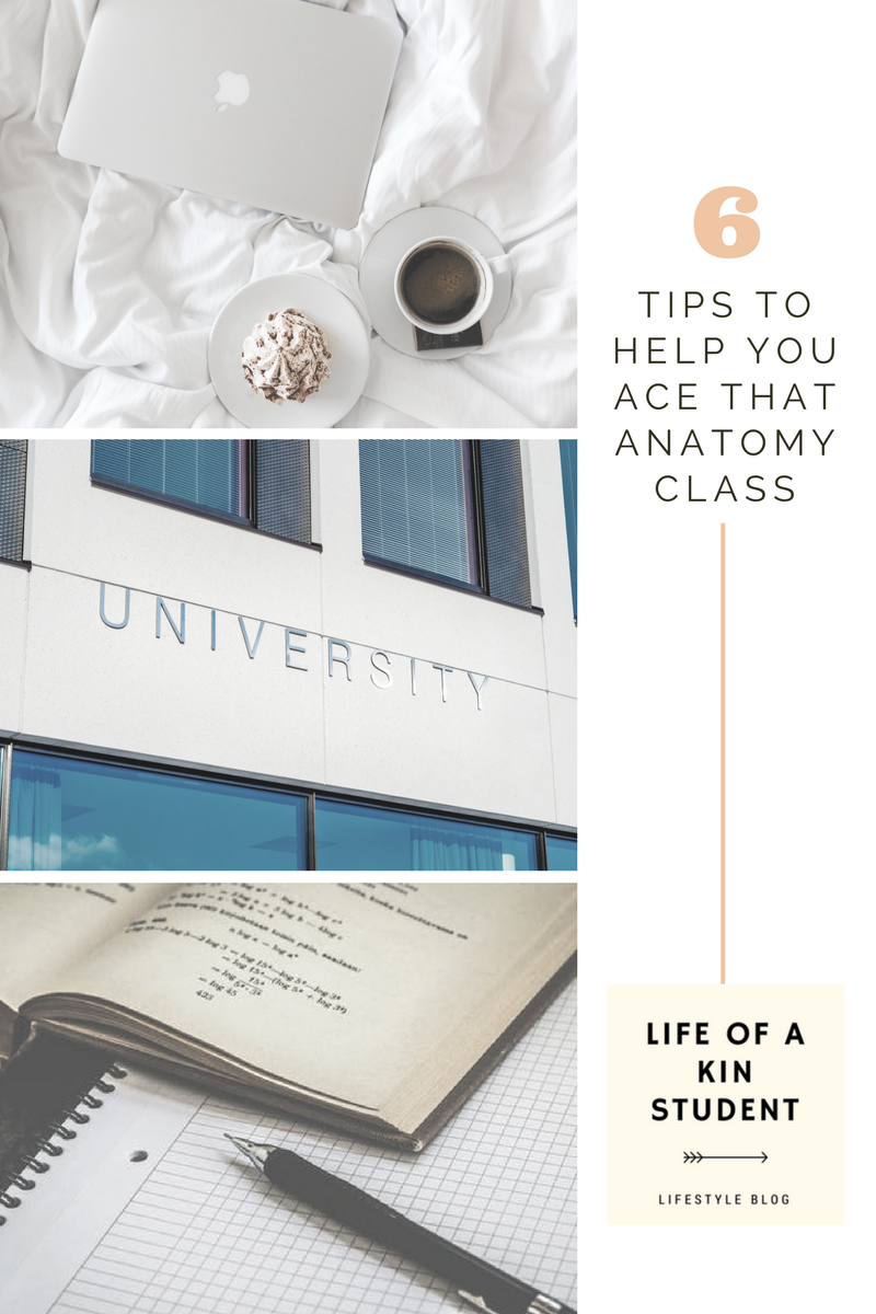Anatomy Class Help- Tips and Tricks to Ace Your Course | Study hacks ...