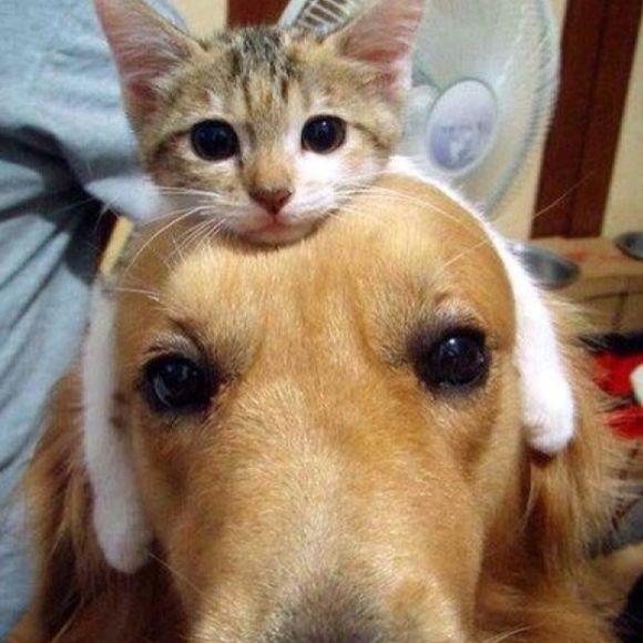 Gato y perros, los mejores amigos.