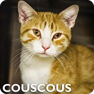 New York Ny Domestic Shorthair Meet Couscous A Cat For Adoption Http Www Adoptapet Com Pet 11765857 New York New York Orange Cats Pets Kitten Adoption