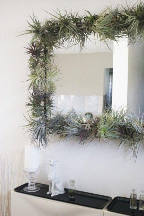 Air Plant Frame Fun Idea To Do Around The Mirror Air