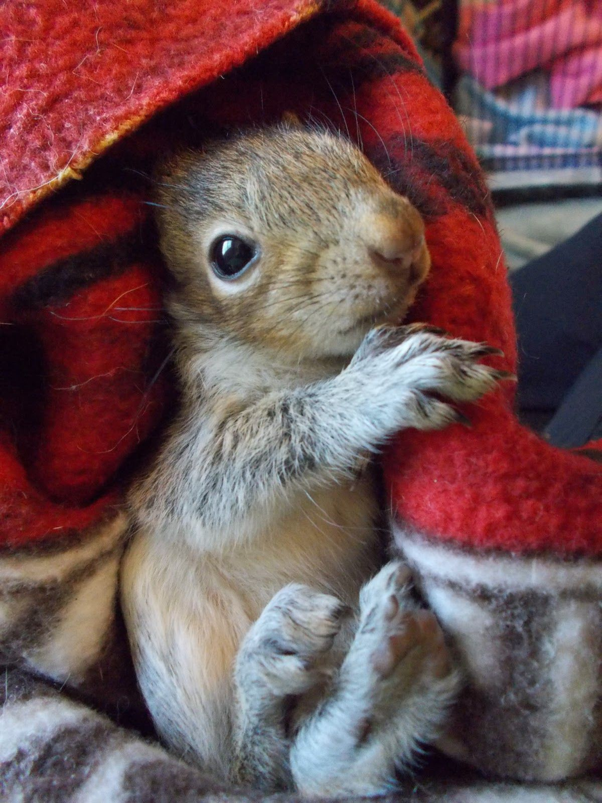Wrapped in a blanket