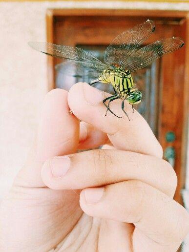 dragownflyy