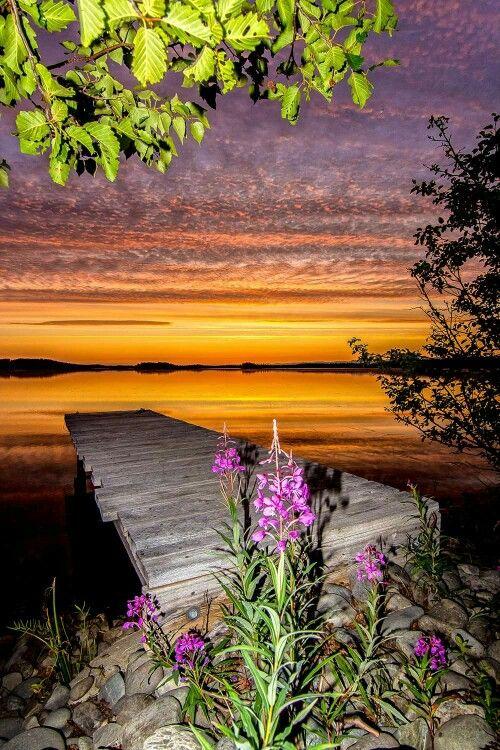 Beautiful Fireweed in Alaska!