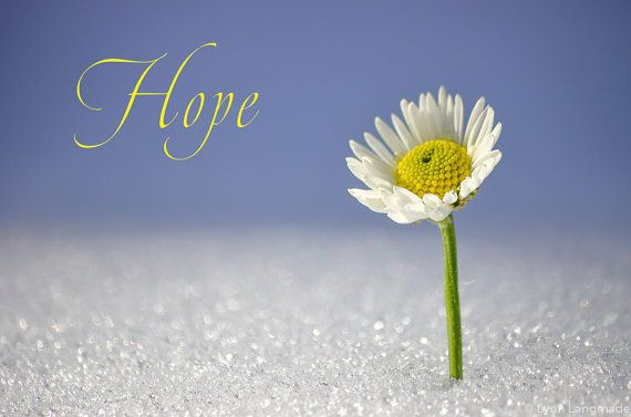 "Nursery Typography Print -- daisy snow purple nursery decor childrens wall art  8x10 11x14 daisy photo nursery art kids wall decor  ""Hope II"