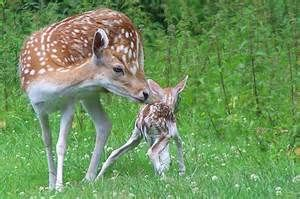 mom and baby animals - Yahoo Image Search Results