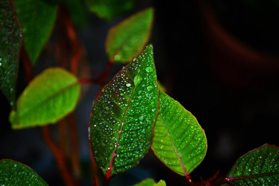 Another picture of raindrops on a leaf. I love taking nature shots.