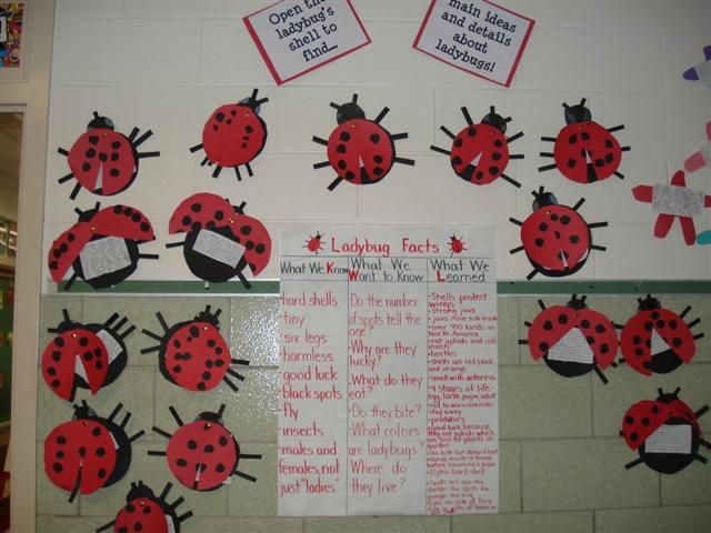 Ladybug Classroom Decoration Ideas : ☆ visit our facebook page for more freebies clever classroom on