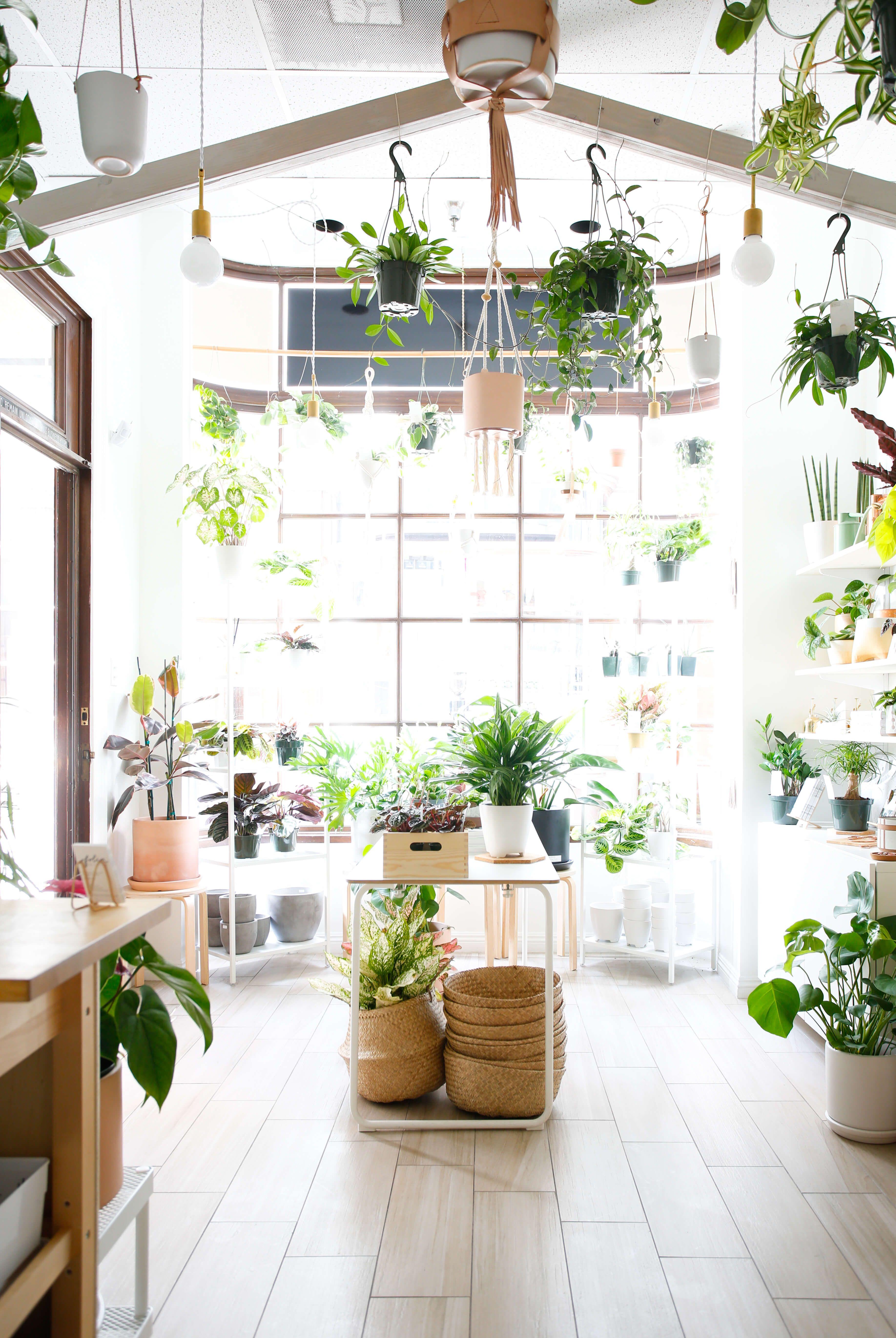 Best Design Stores in LA Indoor garden, Cool designs