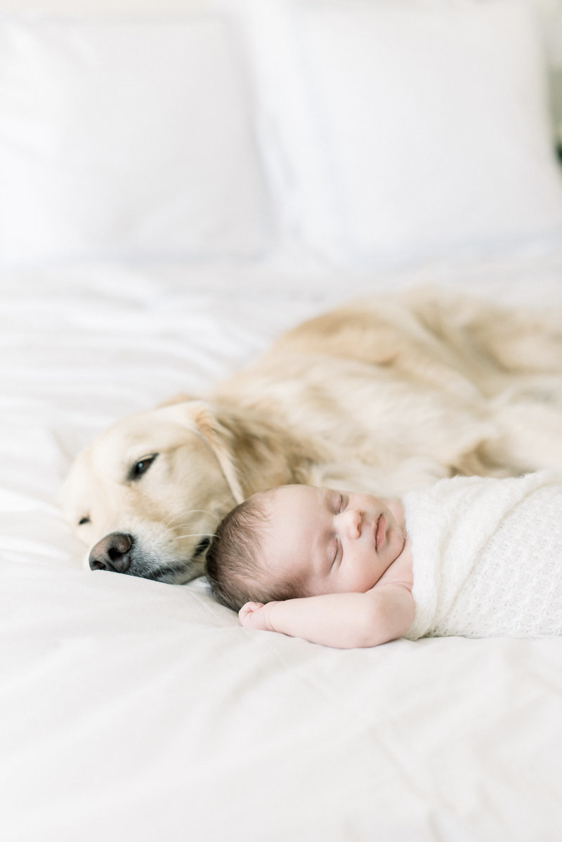 Orange County Newborn And Baby Photographer Aliso Viejo Newborn And Baby Photographer Jen Gagli Newborn And Dog Photographing Babies Newborn Baby Photography