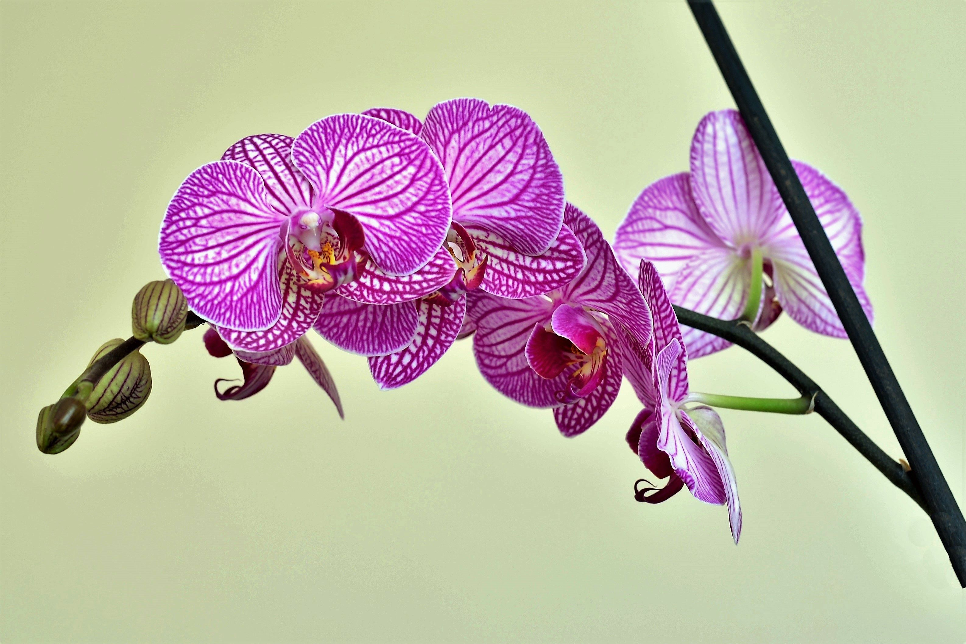 Orchid x wallpapers pinterest