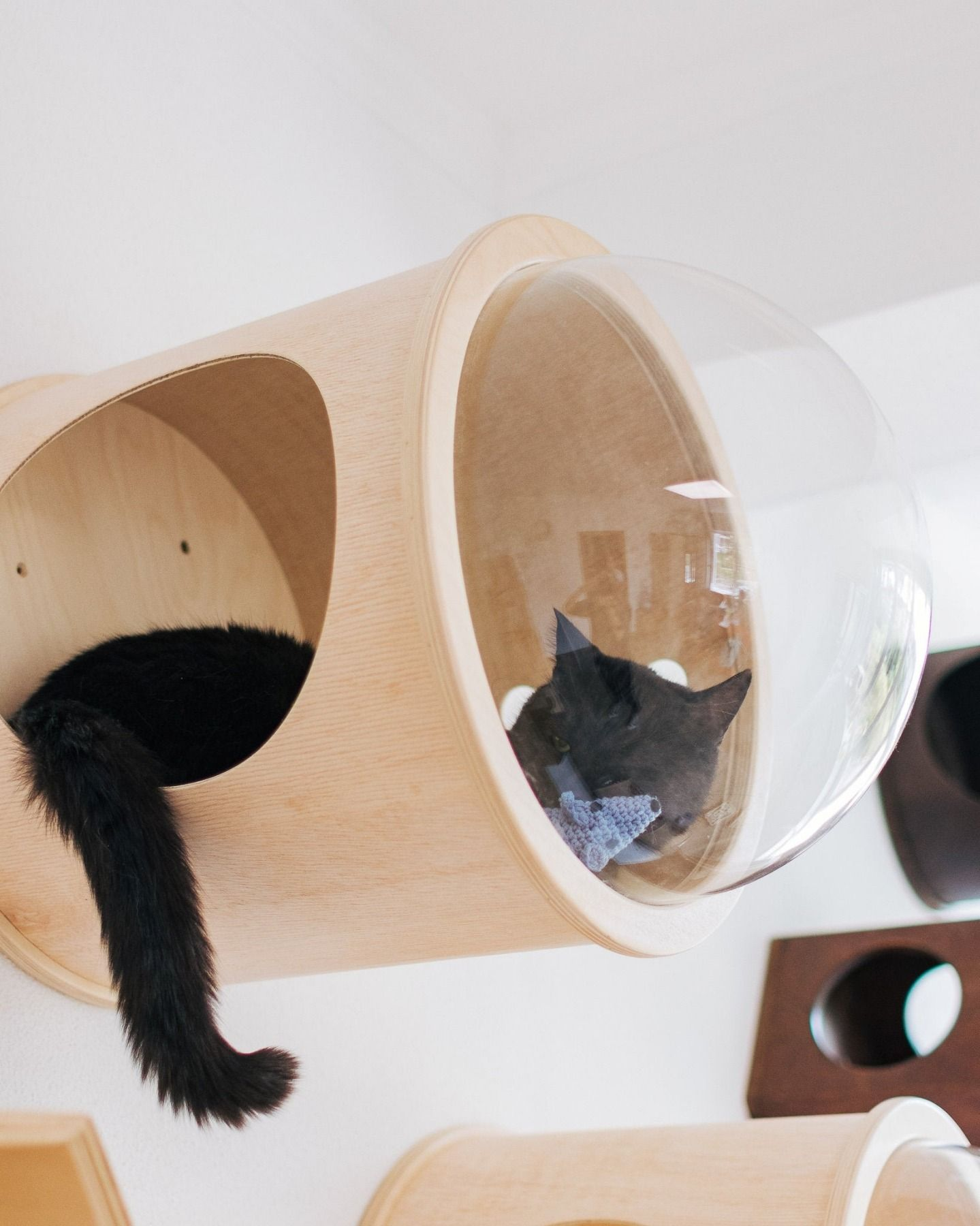 Good Days Are Coming Sosuperawesome Cat Furniture Pets Helper Co On In 2020 Luxury Cat Bed Modern Cat Bed Cat Gifts For Her