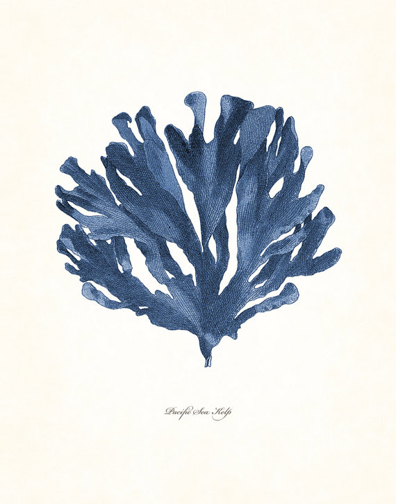Photo of Vintage Indigo Blue Pacific Sea Kelp No. 5, Giclee, Art Print, Nautical Art Beach, Coastal Decor, Wall Art, Natural History Art, Collage