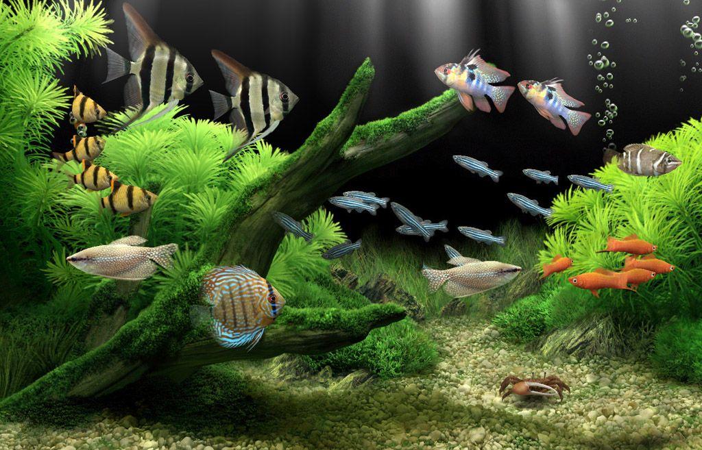 Fish Tanks Dream Aquarium The Worlds Most Amazing Virtual Aquarium For Your Pc Aquarium Screensaver Aquarium Tropical Fish Aquarium